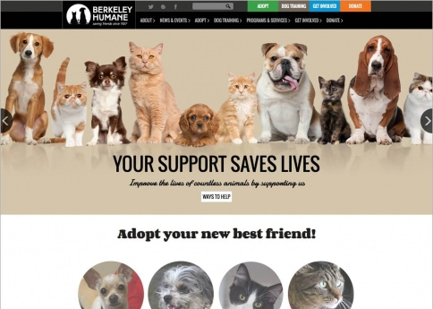 Explore Berkeley Humane's nonprofit website to see how they used Morweb's easy web design tools to create a stunning site.